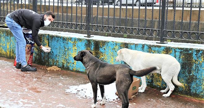 Rize Belediyesi'nden Sokak Hayvanlarına Yem Hizmeti