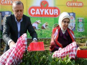 Cumhurbaşkanı Erdoğan, Yaş Çay Taban Fiyatını Açıkladı