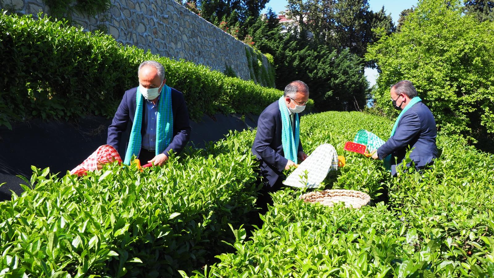 Pandemi Rizeliyi Çay Bahçelerine Döndürdü